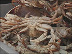 Crab season: 'It's strange for them to be so full at the first of the season'