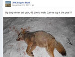 Lawsuit seeks to stop Oregon coyote-killing contest