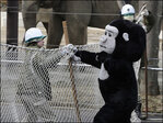 'Gorilla' escapes during Japan zoo drill