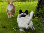 My dog chases the cat, what can I do?