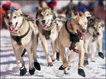 Iditarod sled dog race gets underway in Alaska
