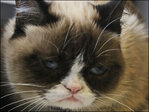 The Web's grumpiest cat has hit her terrible twos