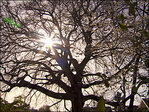 Neighbors fight to save tree: 'It deserves to live'