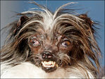 There's a new 'World's Ugliest Dog'