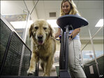 Fat camps offer pudgy pets a way to slim down