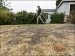 California homeowners warned about brown lawns