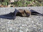 Bats in the State House? No problem for Vermont