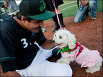 Bark at the ball park: Greenhill celebrates the Dog Days of Summer