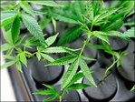 Irony for the day: Virginia man named 'Stoner' busted on pot charges