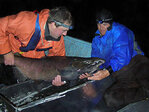 Biologists to study salmon in Siuslaw this fall