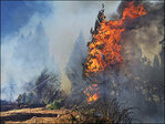 Out-of-control California wildfire shows explosive growth