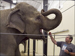Feds investigating after caretaker crushed to death by elephant