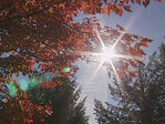 All the pretty colors: What causes autumn's brilliant hues?