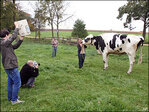 Illinois woman's pet dubbed world's tallest cow