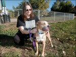 Pit bull vote aims to settle disputes over breeds