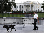 Man apprehended after jumping White House fence