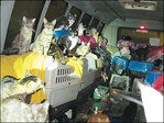 68 cats found in van sentence: No pets, 5 years probation