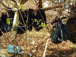 New York man charged for 25 cats hanging in trees