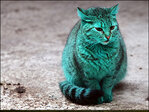 Green cat getting plenty of attention in Bulgaria