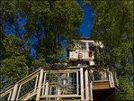 Officials tell family to scale back deluxe treehouse