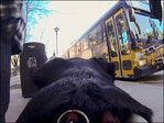 Watch: Seattle's commuter dog captures bus ride on video