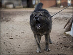Croatian court bans dog from barking at night