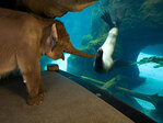 Sea lion in famous zoo photo dies