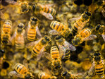 Man stung 100s of times in bee attack at baseball game