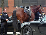 Police horse gets loose, gallops through downtown Cleveland
