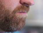 Sick a lot? Your beard may be to blame