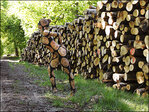 Photos: Body paint artist disguises model in woodpile