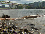 Mayor proposes Portland's 1st official beach along Willamette