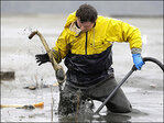 Asian demand turning Puget Sound's geoducks into gold