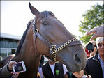 American Pharoah owners racing to capitalize on champ's name