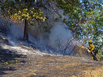 Arson suspected in recent wildfires