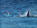 Bare-handed shark wrestler: 'I haven't got a scratch on me'
