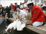 Ever wanted a job counting swans? It's a thing in England