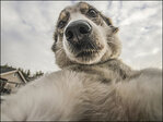 Photos: Even dogs are taking selfies these days...