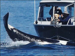 Watch: Dog gets incredible encounter with orca off San Juans