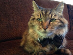 Oregon home to World's Oldest Cat
