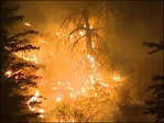 Okanogan wildfire largest in Washington state history