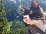 Owner of swimming, hiking cat: 'We think he might be part dog'