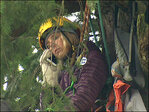 Tree sitter comes down after city explains legal reasoning for cutting trees