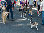 Photos: Oregon Humane Society&apos;s Doggie Dash