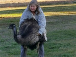Springfield Police respond to emu on the loose