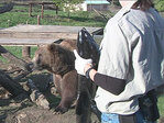 BBQ, salmon and bears! Wildlife Safari hosts all 3