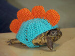 Tortoise sweaters: Cozies for your cold-blooded friends