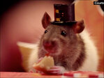 Video shows hampsters enjoying Thanksgiving dinner