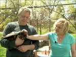Rented chickens often find permanent home