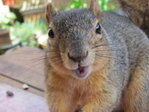 Squirrel blamed for $300K damage to Ind. building